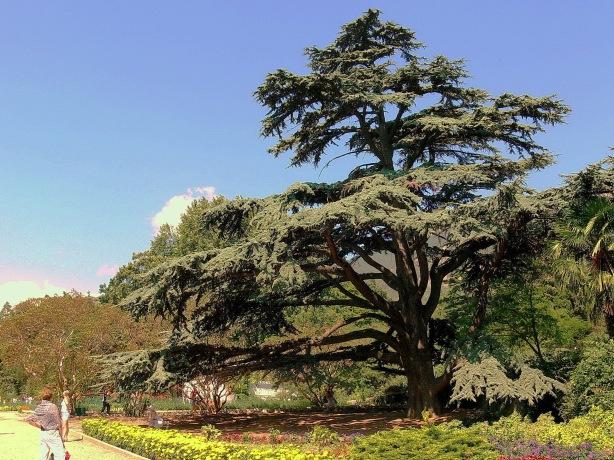 Jardín botánico Nikita