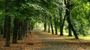 Jardin Botanico A. Fomin 1