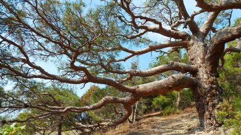 La sorprendente resistencia de la madera
