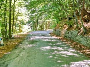 Camino de bajada