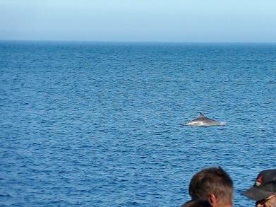 Katsiveli. Delfines