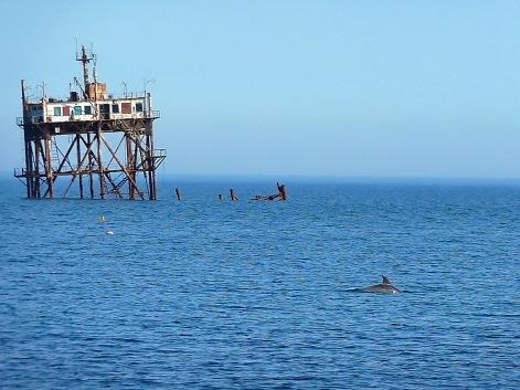 Delfines cerca de la Plataforma